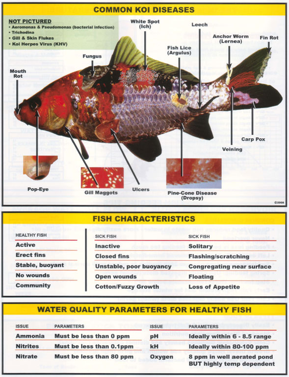 Important information on aeration for Pond fish diseases